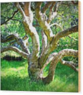 Tree In Golden Gate Park Wood Print