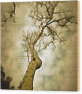 Tree Top In The Clouds Wood Print