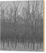 Trees In A Row Wood Print