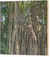 Trees With Aerial Roots At The Coba Ruins  Wood Print