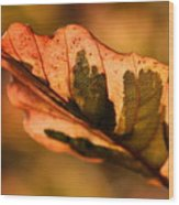 Tri-color Beech In Autumn Wood Print