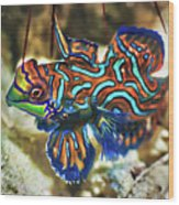 Tropical Fish Mandarinfish Wood Print
