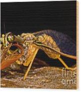 Tropical Mantispid Wood Print