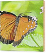 Tropical Queen Butterfly Framing Image Wood Print