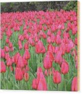 Tulip Field Wood Print by Richard Mitchell