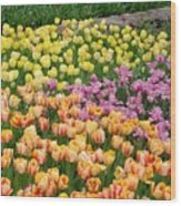 Tulips Galore  Wood Print