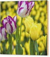 Tulips Garden Wood Print