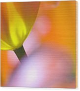 Tulips Wood Print by Silke Magino