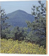 143419-turk Mountain Overlook  Wood Print
