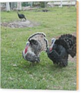 Turkeys In The Yard At Laguna Guerrero Wood Print
