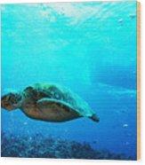 Turtle Cove Wood Print