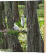 Two Baby Great Egrets And Nest Wood Print