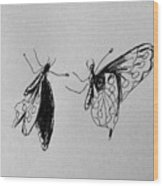 Two Butterfly Wood Print