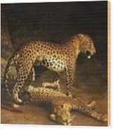 Two Leopards Lying In The Exeter Wood Print