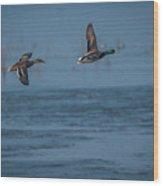 Two Mallard Ducks In Flight Wood Print