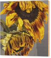 Two Sunflowers Tournesols Wood Print