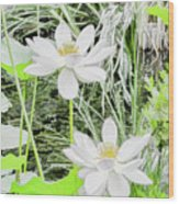 Two Water-lilies Wood Print