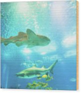 Undersea Shark Background Wood Print