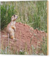 Utah Prairie Dog Wood Print
