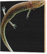 Valdina Farms Salamander Wood Print