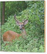 Velvet Buck Wood Print