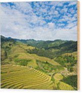 Vietnam Rice Terraces Wood Print