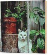 Village Cat Wood Print