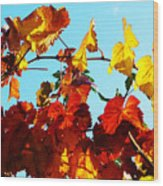 Vineyard 12 Wood Print