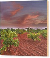 Vineyards At Sunset Wood Print