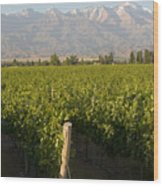 Vineyards In The Mendoza Valley Wood Print by Michael S. Lewis