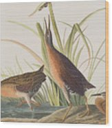 Virginia Rail Wood Print