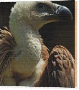 Vulture. Gyps Fulvus Wood Print