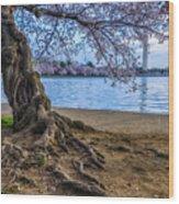 Washington Monument Cherry Blossoms Wood Print