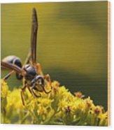 Wasp On Wildflower Wood Print