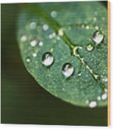 Water Droplets Wood Print