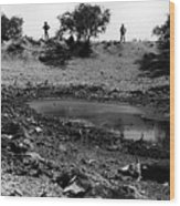 Water Hole Dead Cattle Cowboys  Drought Tohono O'odham Indian Reservation Near Sells Az 1969 Wood Print