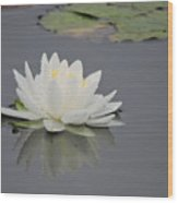 Water Lily Collection Wood Print