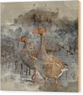 Watercolour Painting Of Beautiful Greylag Goose Anser Anser In W Wood Print