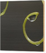 Waterdrops Catch By Grapevines Wood Print