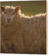 Welsh Lamb In Sunny Sauce Wood Print