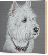 West Highland White Terrier  Wood Print by Patricia Ivy