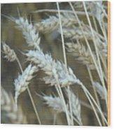 Wheats  Wood Print