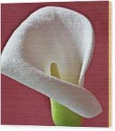 White Calla Wood Print
