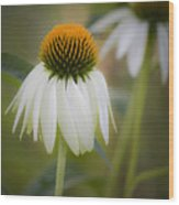 White Coneflower Wood Print