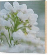 White Flower Close-up Wood Print