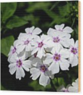 White Flowers Wood Print