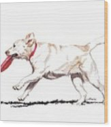 White Frisbee Dog Wood Print