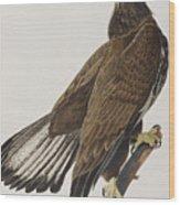 White-headed Eagle Wood Print