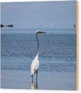 White Heron In The Keys Wood Print
