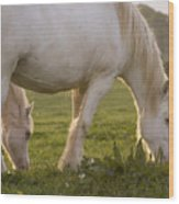 White Horses Wood Print